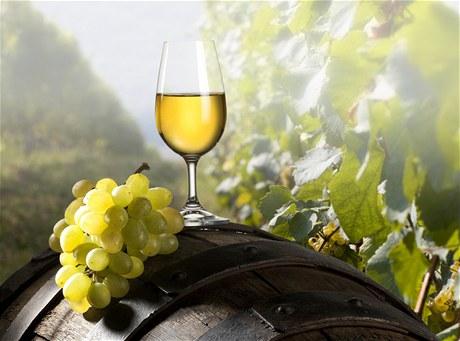 Výstava vín Brno-Vinohrady 2020